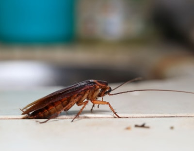 Pests! Landlords to get inside track on pest control