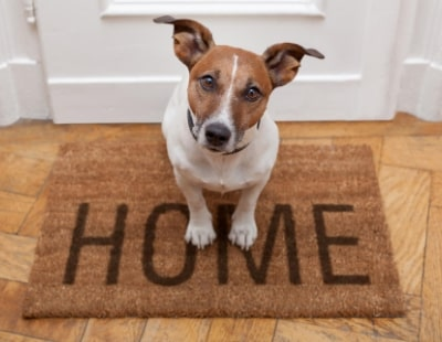 Does your tenant have a pet, even if you haven't given permission?