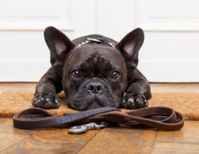 Generation Rent offers existing tenants advice on getting a pet